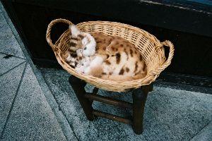 気まぐれ写真館&雑談 白い花、可憐ですね(^_^)☆  猫です。
