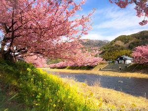 9087 - タカセ(株) 花見だ花見