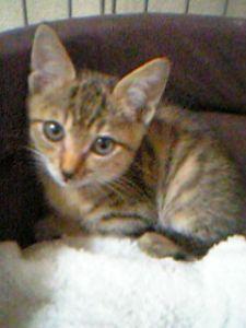 2018年4月24日(火) ソフトバンク vs 西武 3回戦 こんばんは♪ 10年くらい前にワンコの散歩中に、すり寄ってきた子猫を拾ってしまったことがあります 連