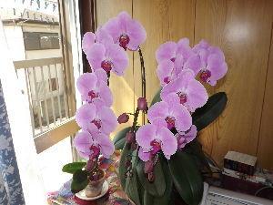 野菜作りお花等もされる方お話したいです eichan,やっと遅い春が来てくれたようですね。 桜の花が春を呼んでくれたのでしょうね。これからは
