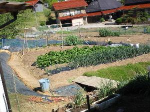 野菜作りお花等もされる方お話したいです  皆さん おはようございます。   退屈な入院生活よりは目覚めると畑も見えて、家のよさが判ります。