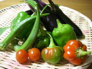 友達いない主婦 こんばんはー 久し振りに野菜を見たら陰に隠れて結構なってました。