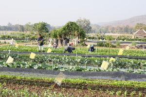 チェンマイ暮らしも慣れました 国立チェンマイ大学、農学部の農業試験場の風景です