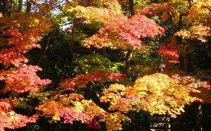 写真が趣味です。 綺麗で鮮やかな紅葉は観ていて飽きません ポイントを心得た方が来訪されていました