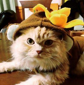 マンチカンの子猫産まれました❗️ りんちゃんの兄弟だちも大きくなったかなぁ~♪ りんちゃんは、すくすく元気に育っています。