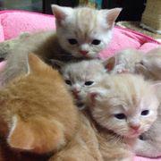 マンチカンの子猫産まれました❗️