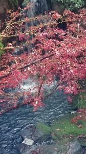 白い紙に 適当に書き込みを・・・ お早うございます。  小雨が🌂 これから奈良公園を散策 今日ものんびりと 考えていましたが夕方用事が