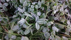 雑談広場 本当に寒くなってまいりました。 10月の末から霜が降りています。 タイヤも冬のに変えましたしね。 あ