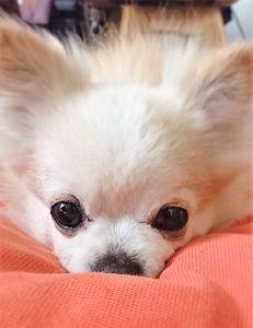 何を読み、何を聴き、何を観てきたか おお、懐かしいお名前が出てますね。  先日、愛犬テトが14年の生涯を終えました。  今は3000円の
