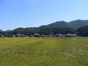 1491 - 中外鉱業(株)  ヨシ子は、@17円×5000株で長期の指値を出していましたが、500株だけ約定しました