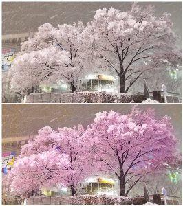 最後が「ん」になるしりとり(。A。) 新宿駅東口  ち  こんちわ はらへったー!٩( ᐛ )و >ハクビシン ハクビジン(白美人)