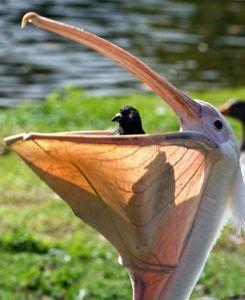最後が「ん」になるしりとり(。A。) ペニーオークション  よ  こんちわ >飛ばして戻って来ない 戻って来ない方がいい鳩といえばポ