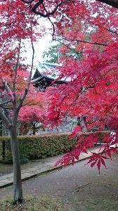 重松清さん コナンさん、今晩は。  先日、図書館から連絡があり待望の(守教:帚木蓬生さん)を借りて読了しました。