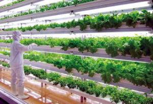 2文字しりとり [水耕栽培]  土が必要ないので立体的に育てられるから 野菜工場のよう  つぎは「ばい、はい」