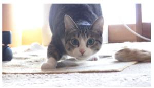 2191 - テラ(株) テラを見つめる警察・検察の様子を猫で例えるとこんな感じ