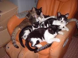王子様を探して 今考え付いた。 猫を飼えば子供は一匹(一人)くらい帰って来るかも。  さて、どうやったら猫屋敷になる