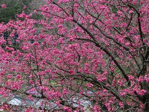 鹿児島大隅半島に お住まいで60才以上の方。   ~~朝から雨 ・・・・ 少し寒い様な日だった~~        行きたい所も無く~      孫