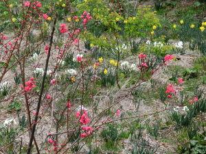 鹿児島大隅半島に お住まいで60才以上の方。   ~~寒さを感じない日 ・・・・ 朝曇りは~よか天気だった~~        準決勝は~同点になる