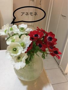 9984 - ソフトバンクグループ(株) さくら🌸も良いけれど。 この色っぽいお花🤗好き。