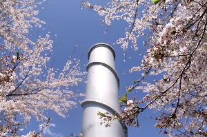 旅と酒をこよなく愛する人生♪ 今日も雨。4月に入ってから雨の日が多く、花見客の足も遠くなります。 ソメイヨシノは散りましたが、また