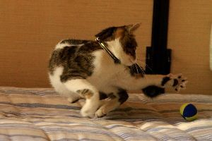 お友達になってください ☆☆☆。 こんばんは~ 今日は寒かった~!!  一日中家に籠って、子猫と遊んでいました。写真はその時の、サッカ