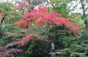 川越・鶴ヶ島・坂戸・東松山・東上線沿線近郊の方 雑談 そろそろ 紅葉の季節になってきたなー^^ でも最近週末 曇りとか雨が多い><