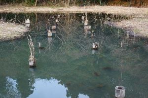 伝写版 根川湿地
