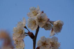 伝写版 #春