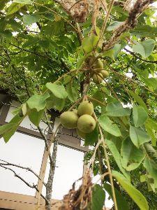 花日記 こんにちは、 またまた台風ですね💦 気をつけてくださいね!  岐阜地方は暑かったみたいですねー こち