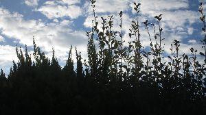 シニア世代の楽しみ 11月14日 Good Evening🌃  家の周囲を一回り 空を見上げてブラブラ。 隣町から 心友
