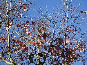 シニア世代の楽しみ 11月15日 Good Afternoon♪  11月も折り返し 秋色が濃くなってきました。 皆さん