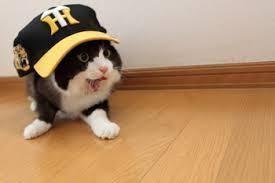 ネコ科球団を愛するファンの人達!(っ`・ω・´)っ 一筋さん、こんにちは🎵 (っ`・ω・´)っ  な~んか最近野球がつまらなくな