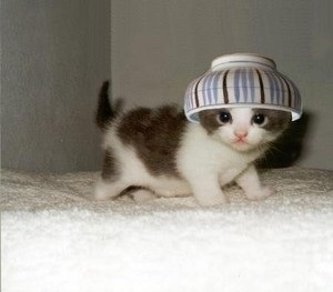 トピ主どの!また落ちちゃいました。 >比喩が理解出来ないんだな >可愛そうなゼエロくん  ありがとう茶碗クンwww