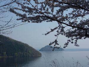5201 - 旭硝子(株) 奥琵琶湖パークウエイの桜. 大浦~葛篭尾崎~月出を結ぶ約18.8Kmのドライブウエイ. 約4000本