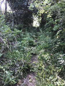 3758 - (株)アエリア ちなみに某島を散策して見つけた遊歩道だぞ(°▽°) 300mほど進んで断念したわい(