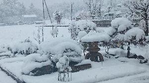 バラの香りのお部屋「熟年専科」 おはようございます!  きのうは予報どうりた20㌢位降りましたが、 気候のせいか春のような重たい雪で