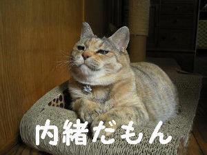 2351 - (株)ASJ ふぅ~ ぶせにっつくん率いる「どす恋ジゴロ!」ファミリーのぴちょⓇーぬさんいつもありがとう! ワシ、