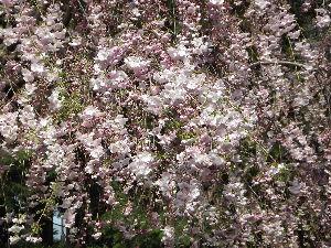残りわずかの五十代 りえさん、良い陽気になりましたね。桜も満開、ついついつられて歩くようになりますね。 小さいお家、です