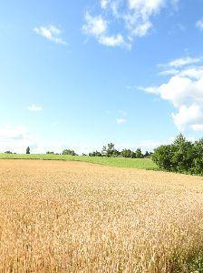 私の秘密 小麦 2年半ぶり高値 国際価格、米産地で乾燥続き     小麦の国際価格が急上昇し、2年半ぶりの高値