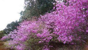 徒然なる団塊部屋 シランさん、みなさんこんにちは、、  今日は晴天日、連休前の小春日和ですが、ヒノキ花粉が少々酷いです