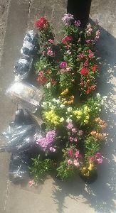 ✿✿✿✿✿✿ い や し、い や さ れ・・ こんばんは  @さくらんぼ様   中中、JA、花苗、陳列なくて  今日、久久、陳列、購入でした  花