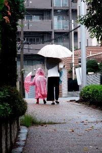 70歳代のバソコン 気温13度と低く雨がかなり降っていて寒い火曜日の朝。散歩はとても無理です。甲子園はどうなるでしょうか