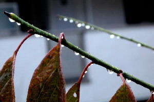 70歳代のバソコン 気温7度と昨日より8度も高いが雨が降っていて散歩は止めた水曜日の朝。今は雨が止んで空が明るくなってき