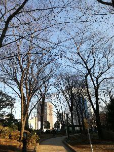 赤羽(川口)で盛り上がろう! 東京で桜が開花した翌日に、川口の公園をぶらぶらしてみたけど、開花してなかったね。