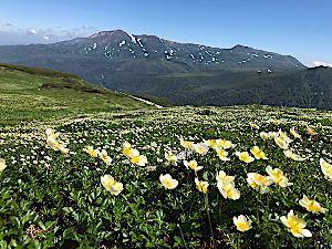 栃木百名山 こんばんは。 今年の夏の思い出は、北海道の山々。 念願叶って、大雪山系(トムラウシ〜化雲岳)縦走しま