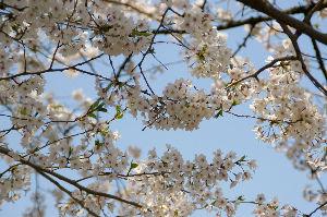 季節は巡る こんにちは~^^^  >「死期は来るけど四季は来ない」    心がけひとつで四季はやってきますよ^^