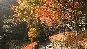 ▲武甲山ファンふたたび▲ 【11/4(土) 奥多摩三頭山 山行報告】  都民の森周回で三頭山に登りました。  ヤマレコはここか