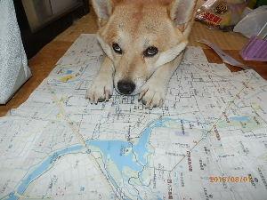 ノーリードの犬に飼い犬が噛みつかれました。 こんにちは。もう2年前の出来事の様ですので既に解決済みかも知れませんね。 私も柴♀8歳を飼っています