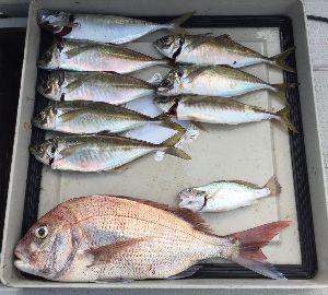 大阪湾船釣り仲間募集(マイボート) 太刀魚狙いからの 鬼アジ狙い~   本日 太刀魚・鬼アジ・真鯛・青物など 何でも釣れるものを釣る~