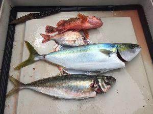 大阪湾船釣り仲間募集(マイボート) ちょっといろいろあってなかなか釣りに行けませんでしたが ボチボチ釣りには出掛けてます 釣果の程は あ